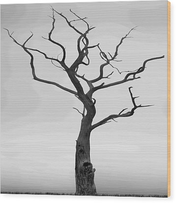 Twisted Wood Print by Mike McGlothlen