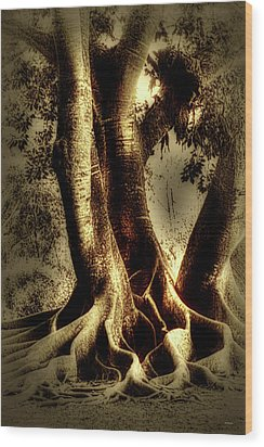 Wood Print featuring the photograph Twisted Trees by Tom Prendergast