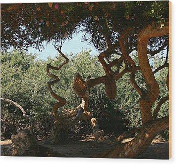 Twisty Tree Wood Print