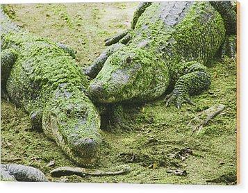 Two Alligators Wood Print by Garry Gay