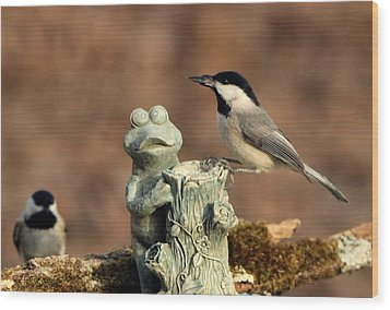 Two Black-capped Chickadees And Frog Wood Print by Sheila Brown