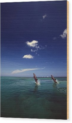 Two Bottlenose Dolphins Dancing Across Wood Print by Natural Selection Craig Tuttle