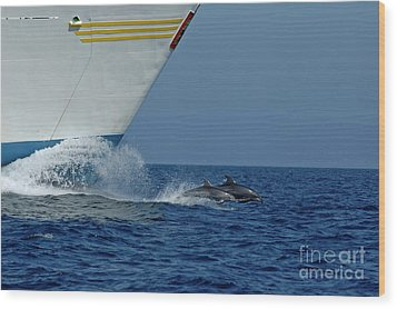 Two Bottlenose Dolphins Swimming In Front Of A Ship Wood Print by Sami Sarkis