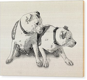 Two Bull Terriers Wood Print by Michael Tompsett