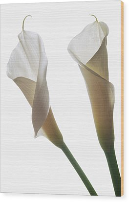 Two Calla Lilies Wood Print by Terence Davis