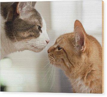 Two Cats Almost Kissing Wood Print by Caro Sheridan / Splityarn