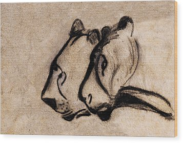 Two Chauvet Cave Lions - Clear Version Wood Print