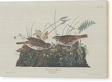 Two-colored Sparrow Wood Print by Anton Oreshkin