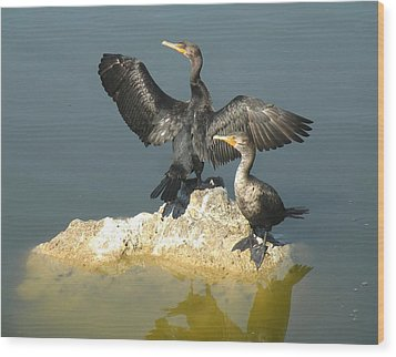 Two Cormorants Wood Print by Rosalie Scanlon