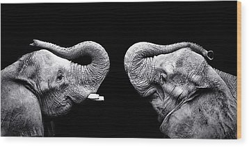 Two Elephants Face To Face Wood Print by Malcolm MacGregor