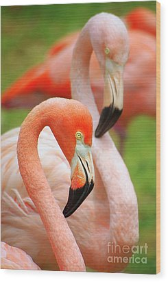 Two Flamingoes Wood Print by Carlos Caetano