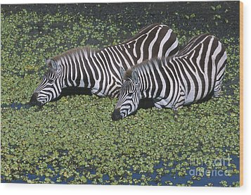 Two For Lunch Wood Print by Sandra Bronstein