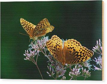 Two Fritillaries Wood Print by Kathryn Meyer