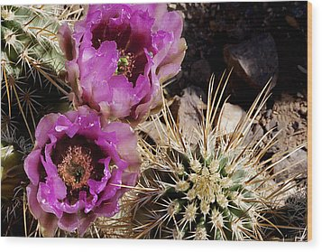 Wood Print featuring the photograph Two Fucshia Blossoms  by Phyllis Denton