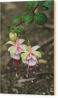 Two Fushia Blossoms Wood Print by Douglas Barnett