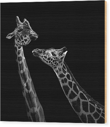 Two Giraffes In Black And White Wood Print