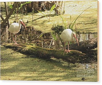 Two Ibises On A Log Wood Print by Carol Groenen