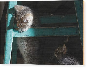 Wood Print featuring the photograph Two Kittens With Turquoise Chair by Doris Potter
