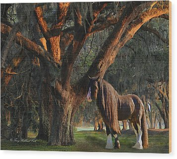 Two Majestic Souls Wood Print by Terry Kirkland Cook
