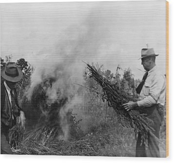 Two Men Burning Marijuana In Field Wood Print by Everett