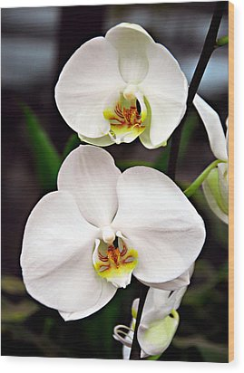 Wood Print featuring the photograph Two Orchids by JoAnn Lense