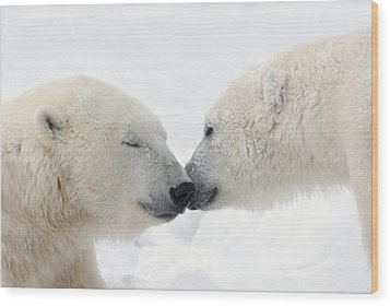 Two Polar Bears Ursus Maritimus Wood Print by Richard Wear