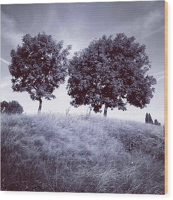 Two Rowans The Cloddies, Nuneaton Wood Print by John Edwards