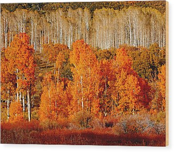 Two Rows Of Aspen Wood Print