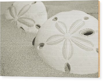 Two Sand Dollars Rest In The Sand Wood Print by Ralph Lee Hopkins
