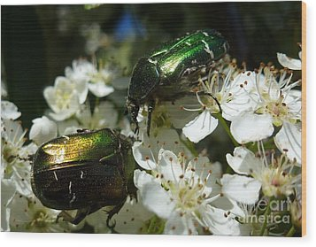 Wood Print featuring the photograph Two Scarabs Metallic Green by Jean Bernard Roussilhe