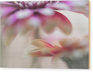 Wood Print featuring the photograph Two Souls 1. Macro Gerbera by Jenny Rainbow