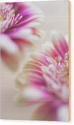Wood Print featuring the photograph Two Souls. Macro Gerbera by Jenny Rainbow