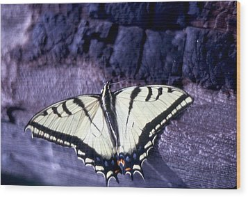 Two Tail Swallowtail Wood Print by Chris Gudger