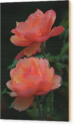Two Tangerine Roses Wood Print