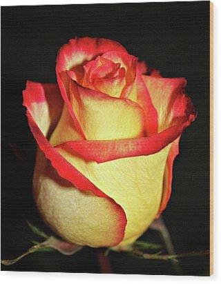 Two Tone Rose Wood Print by Cathie Tyler