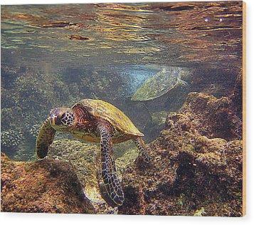 Two Turtles Wood Print