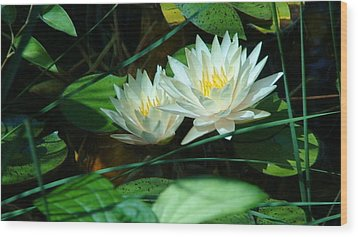 Two Waterlilies Wood Print by Angela Annas