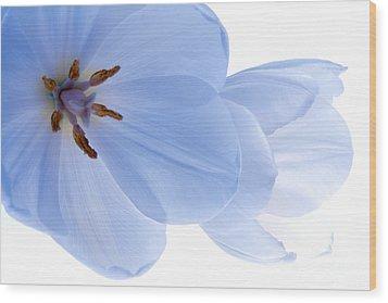 Two White Tulips Wood Print by Hideaki Sakurai