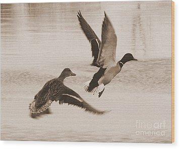 Two Winter Ducks In Flight Wood Print by Carol Groenen