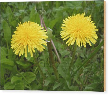 Two Yellow Heads Wood Print