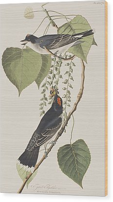 Tyrant Fly Catcher Wood Print by John James Audubon