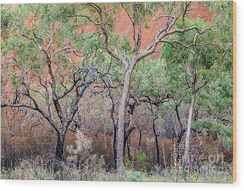 Wood Print featuring the photograph Uluru 05 by Werner Padarin