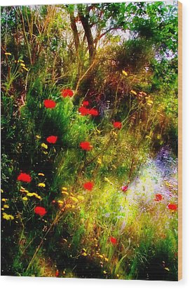Umbrian Wild Flowers 3 Wood Print by Dorothy Berry-Lound