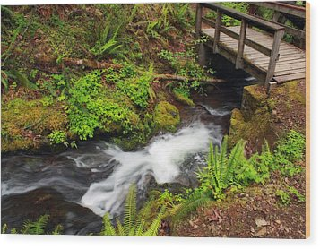 Umpqua Forest Beauty Wood Print by Tyra  OBryant