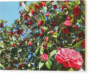 Uncommon Camellias Wood Print