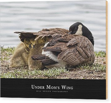 Under Mom's Wing Wood Print by Bill Kesler