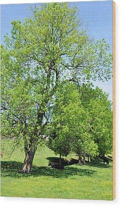 Under The Oak Wood Print