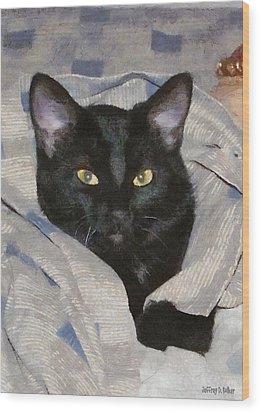 Undercover Kitten Wood Print by Jeff Kolker