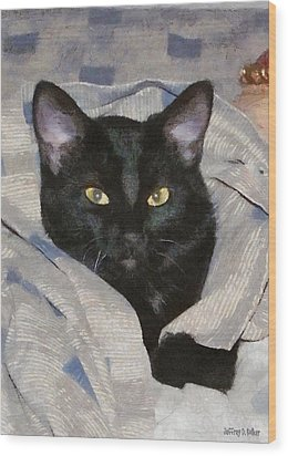 Undercover Kitten Wood Print