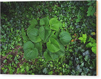 Wood Print featuring the photograph Undergrowth by Anthony Rego
